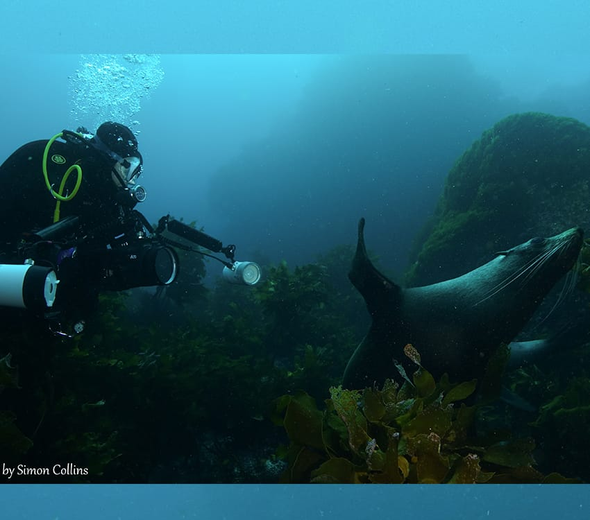 PADI Underwater Photography 850by750